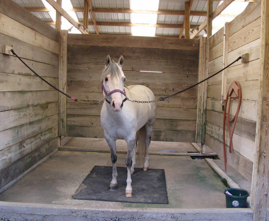 Hilltop Horse Boarding Wash Rack