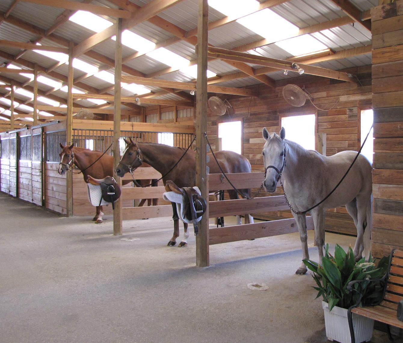 Horse Boarding Austin Texas