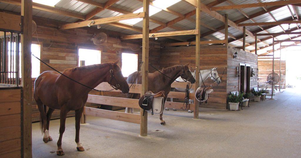 Austin Hunter Jumper Horse Riding